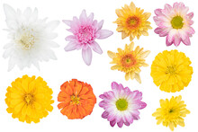 Blurred For Background.Beautiful Multi Color Chrysanthemums As Background Picture.flower On Clipping Path.