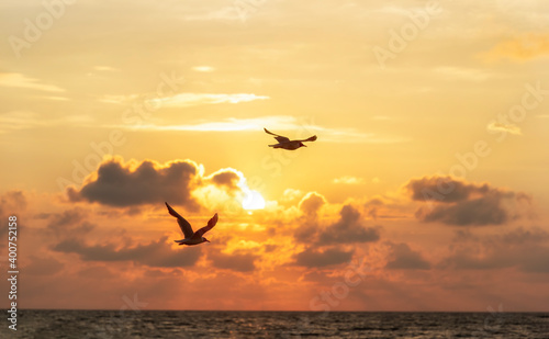 Obraz seagulls flight over the ocean in front of a sunset - fototapety do salonu