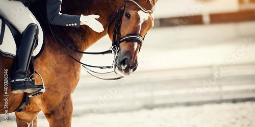Fototapeta Equestrian sport. Praise the horse. Portrait sports stallion in the bridle. obraz