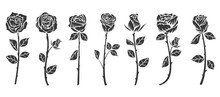 Set Of Monochrome Roses Flower In Minimalistic Hand Drawn Style. Collection Color Art Elements Isolated On White Background. Vector Illustration.