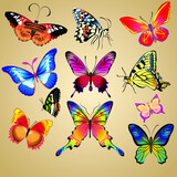 Vector illustration. Set of realistic vector butterflies. Collection of vintage elegant illustrations of butterflies.