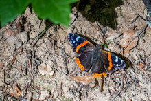 Red Admiral Butterfly Resting On The Ground