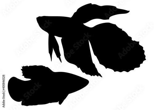 Aquarium fish cockerels in the set. Fototapeta