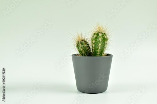 Fototapeta Różne, małe kaktusy w szarych doniczkach. obraz