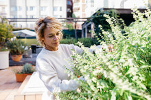 Mature Woman Looking And Touching Flowering Plant While Standing At Rooftop Garden