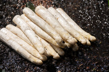New Harvest Of High Quality Big Dutch Washed White Asparagus Vegetables On Farm And Water Drops