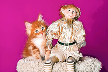 A Nice Red Maine Coon Kitten And An Elf At Christmas.