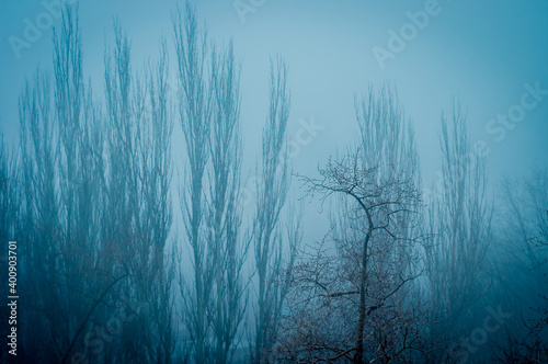 Foto Winter urban frosty landscape - snow covered trees on foggy background