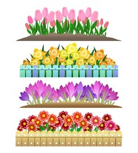Spring Flowers Garden Isolated