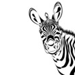 Zebra isolated on white background, vector illustration. Good for print, cover, background, logo, icon, avatar
