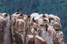 Bird Colony (nesting Cormorants And Gulls) On The Rocks Of Shkota Island In The Vicinity Of Vladivostok In The Sea Of Japan.