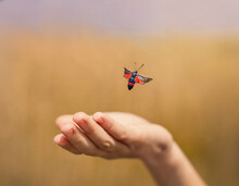 The Insect Flies Away From The Hand. Butterfly With Red Wings. Mottled Meadowsweet. Summer Field. Blurred Background.