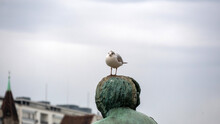 A Black-headed Gull On A Statue