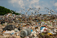 Seagulls Fly Over A Pile Of Garbage At A Large Landfill Near Kyiv, Ukraine. May 2016