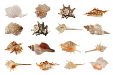 Set Of Different Beautiful Sea Shells On White Background