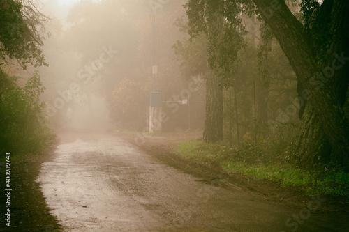 camino con niebla Fototapet