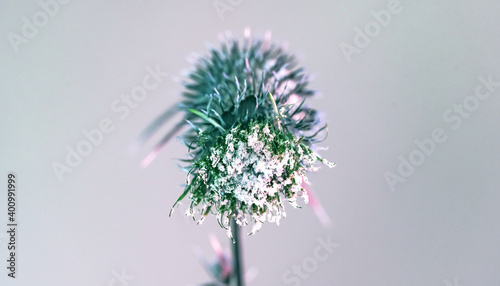 Beautiful abstract flower burdock on a colorful background Fototapet