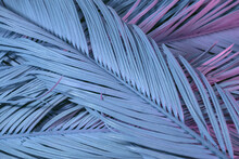 Close Up Beautiful Palm Leaf In Neon Light. Minimalism Retro Style Concept. Background Pattern Texture For Design.