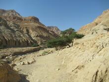 Stunning Scenery In Nachal (Wadi) Arugot, Ein Gedi, Israel