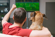Back View Portrait Of A Man Sitting At Home On Sofa With His Dog Friend Watching Football Play Live Broadcast On Tv Together