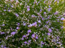 Macro Shot Of Lilac-lavender Five-petalled Flowers Of Sea Lavender