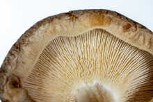 Close-up Of A Mushroom Cap, Texture Of The Bottom Of The Mushroom From An Extremely Close Distance, Selective Focus.