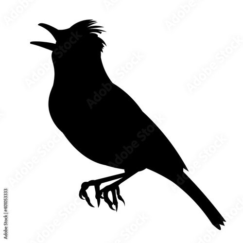 Fotografie, Obraz Vector silhouette of a sitting and singing lark