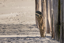 Close Up Of A Rotten Wooden Wavebreaker On A Dry Sandy Beach With Wavebreakersn The Netherlands