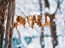 冬の枯れ葉