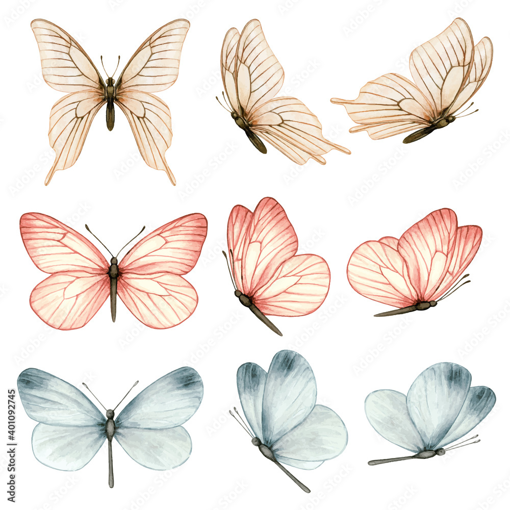 Fototapeta Beautiful watercolor butterfly collection in different positions