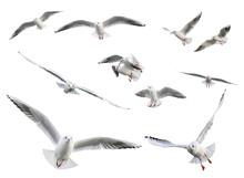 Set Of  Flying Seagulls Isolated On White Background.