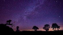 Silhouette Of The Lion Stand Top Mountain.blue Night Sky Milky Way And Star On Dark Background.Universe Filled With Stars, Nebula And Galaxy With Noise And Grain.