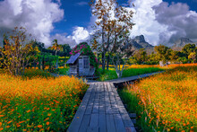 Wooden Hut In A Yellow Flower Field And Valley In Lopburi, Thailand.