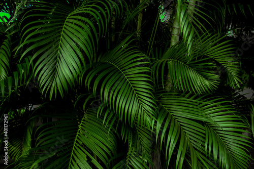 tropical green palm leaf and shadow, abstract natural background, dark tone Fototapet