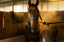 競走馬と飼育員