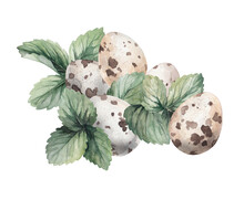 Watercolor Drawing Cute Quail Eggs Ripe Strawberries And Old Vintage Keys Collage 1 On A White Background