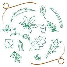 Hand Drawn Set Of Leaves And Fruits Of Deciduous Trees. Sketches On A White Background. Vector Illustration.