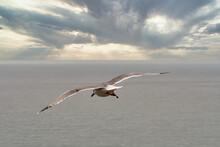 Fly Away Sea Gull Seascape