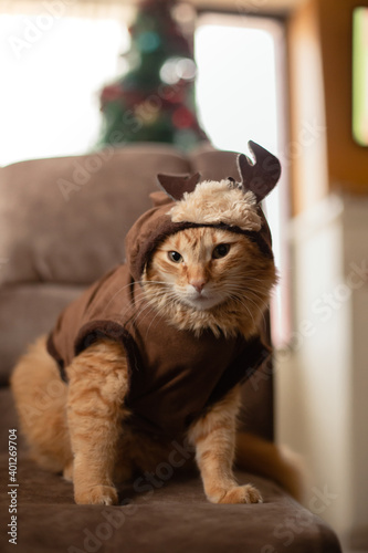 Photo gato con traje de reno en navidad