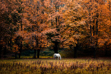 Amazing Scenery Of Autumnal Forest With Golden Foliage And Horse Grazing On Grassy Meadow