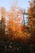 Viernheimer Herbstwald