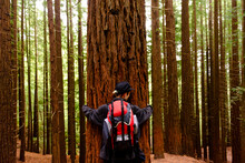 Back View Of Female Tourist Standing Near Huge Tree In Monte Cabezon Natural Monument Of Sequoias