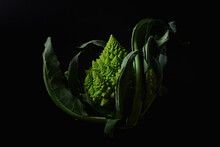 Romanesco Broccoli Cabbage On Black Background