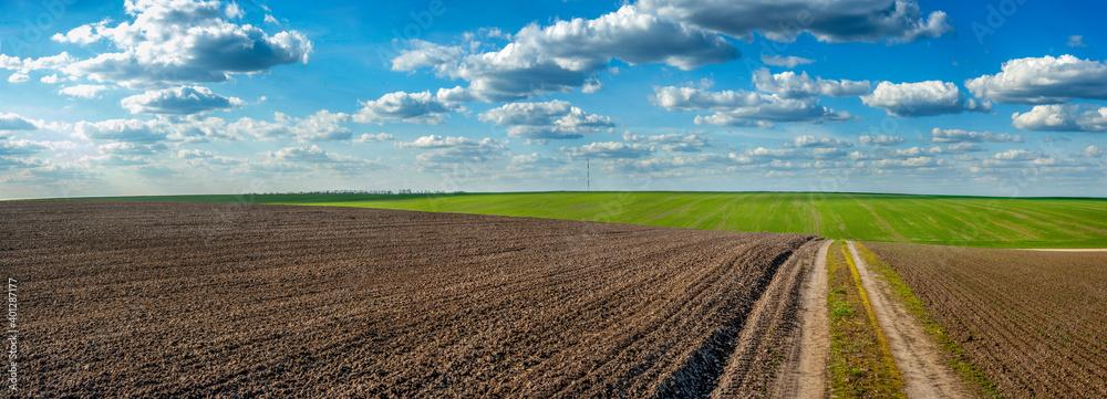 Obraz plowed field and grren fresh wheat dirt road in spring, beautiful blue sky with clouds fototapeta, plakat