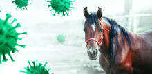 Coronavirus (Covid-19) Patients To Be Treated With Horse Antibodies In Experimental Trial