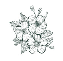 Sketch Hibiscus Flower, Isolated Retro Flower Sign. Tropical Hibiscus Flower