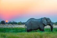 Elephant In The Namibian Etosha National Park At Sunset