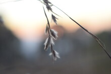 Sun In The Evening Is Captured With Intentionally Blur