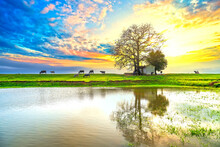Sunset Bombax Ceiba Tree Ancient And Grazing Buffalo Silhouette On  Embankment Reflected On Water Beautifully Fanciful Landscape For Rural Vietnam
