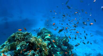 Fototapeta na wymiar Tropical coral reef. Ecosystem and environment. Egypt. Near Sharm El Sheikh